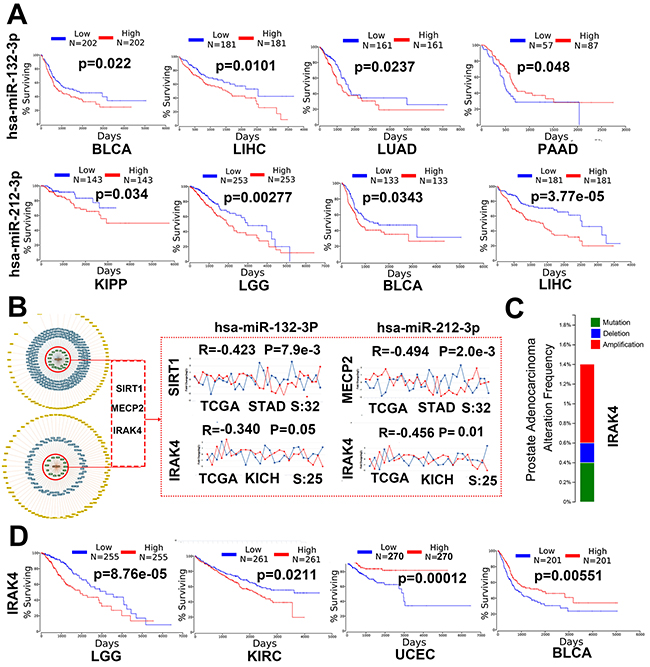 miR-132-3p and miR-212-3p may play a critical role in human cancer.