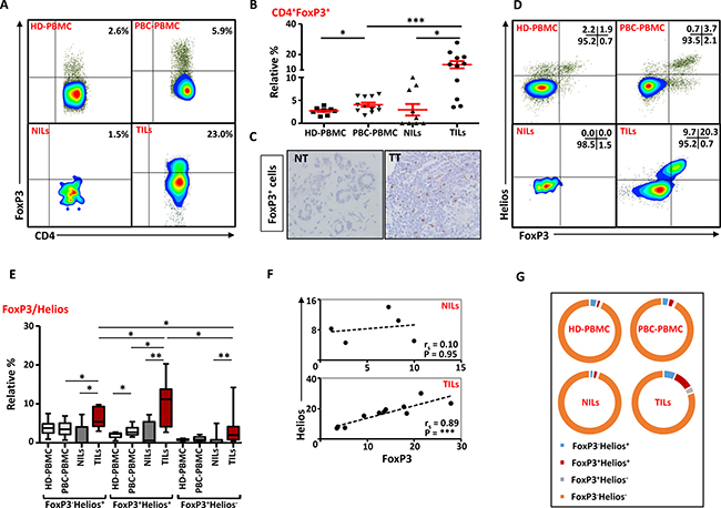 FoxP3 and Helios expression in CD4+ T cells.