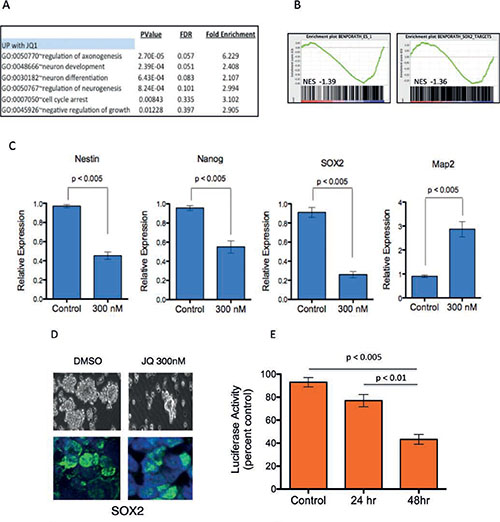 JQ1 suppresses stem cell associated signaling and inhibits medulloblastoma tumor cell self-renewal.