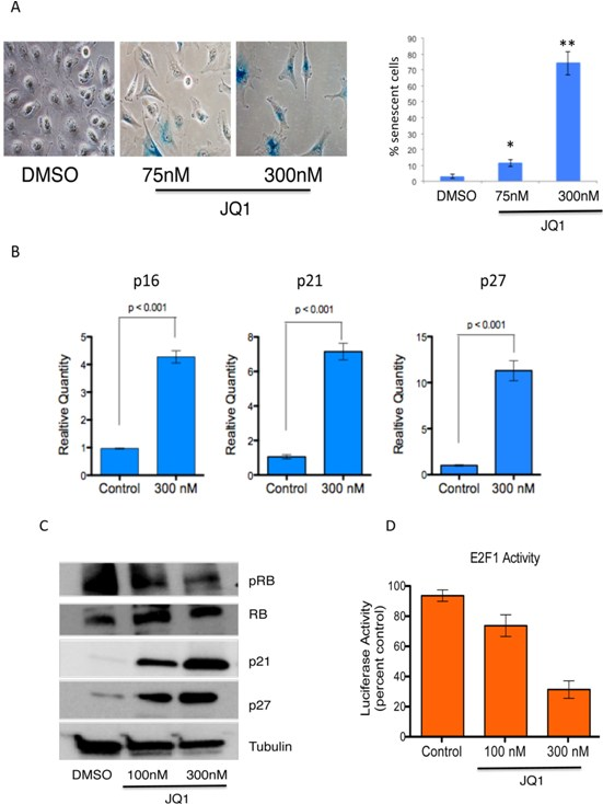 Induction of senescence in medulloblastoma cells by JQ1.