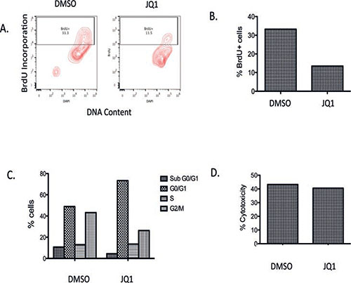 Analysis of BrdU incorporation, cell viability and LDH activity in a primary medulloblastoma patient tumor slice culture with JQ1 (300 nM) treatment or DMSO vehicle control.
