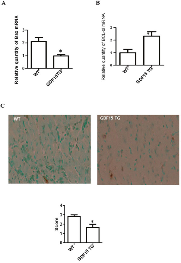 Over expression of GDF15 decreased the expression of pro- and anti-apoptotic genes and reduced apoptotic cells in heart grafts.