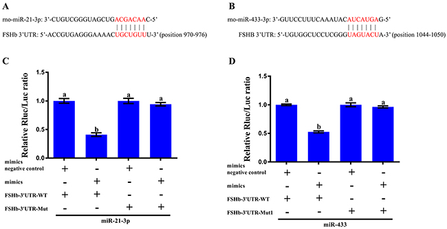 In vitro validation of the interaction between the miRNAs and FSHb.