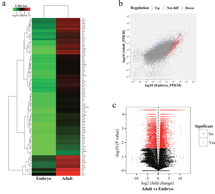 Differentially expressed genes in bovine muscle tissues.