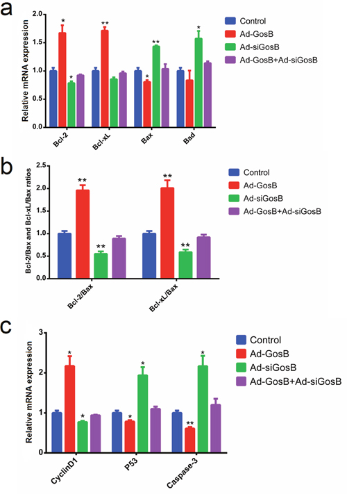 Effects of GosB on the expression of cell survival related genes in murine C2C12 cells.