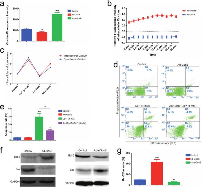 GosB prevents mitochondrial calcium overload and subsequent apoptotic events.