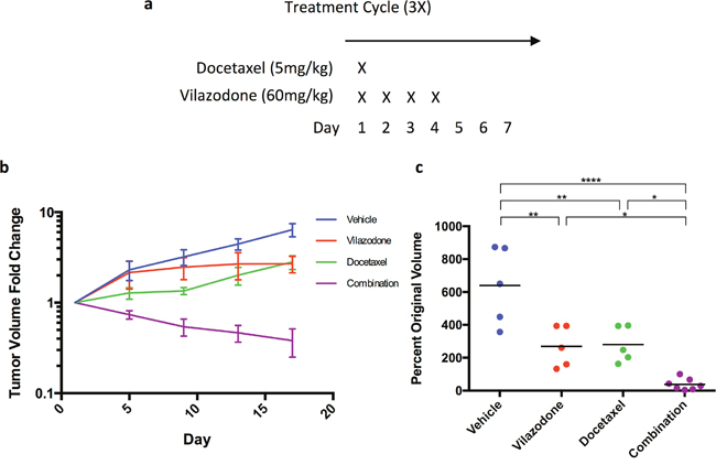 The combination of vilazodone and docetaxel synergistically shrink HCC1954 breast tumor xenografts.