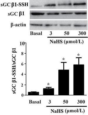 NaHS upregulated sulfhydryl modification of sGC β1.