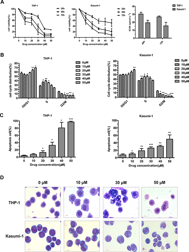 JL1037 inhibits cell proliferation and induces cell cycle arrest and apoptosis in THP-1 and Kasumi-1 cells.