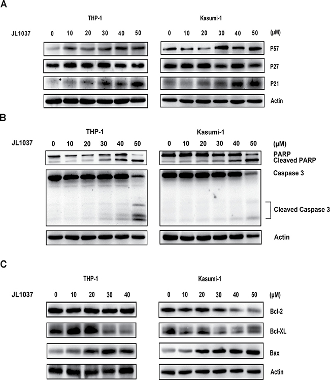 Molecular mechanisms of cell cycle arrest and apoptosis induced by JL1037.