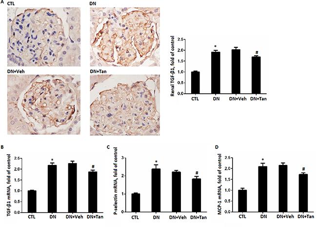 Tanshinone IIA reduced the inflammation.