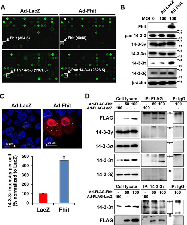 Up-regulation of a 14-3-3 protein in Ad-Fhit-transduced NSCLC cells.