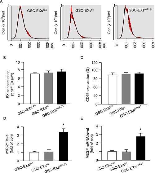 Up-regulation of miR-21 in GSCs by miR-21 mimic transfection increased the levels of miR-21 and VEGF mRNA expression in GSC-EXsmiR-21.