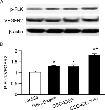 GSC-EXsmiR-21 had better effect than GSC-EXscon and GSC-EXssc on activating the VEGF/VEGFR2 signal in ECs.