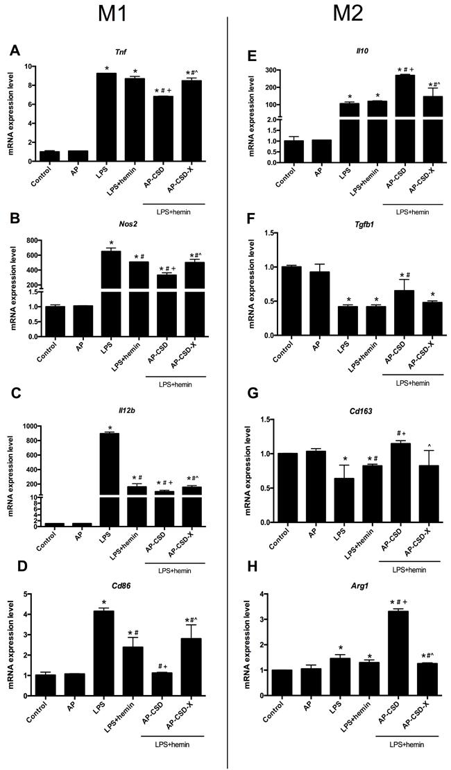 CSD peptides shifted alveolar macrophages polarization toward M2 phenotype.