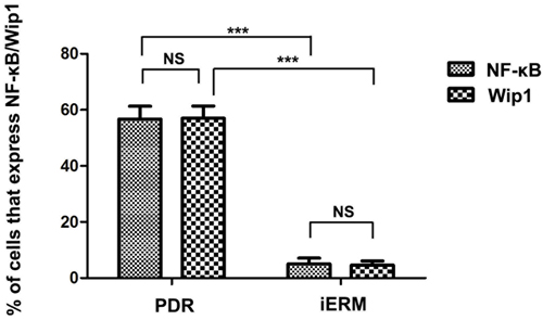 The number of positive cells for NF-kB and Wip1 was scored in both groups, and the percentages of positive cells were used for statistical comparison.