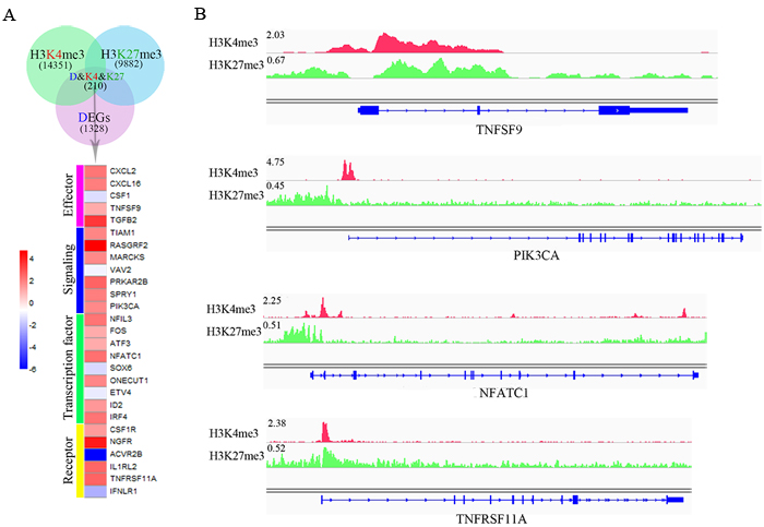 Dynamic chromatin states may be crucial for NK cell activation.