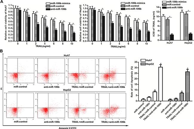 Anti-miR-106b enhances the TRAIL-induced apoptosis in HCC.