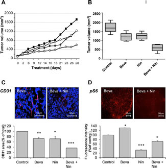 Influence of bevacizumab, nintedanib and their combination on tumor growth, microvessel density and mTORC1 activity in bevacizumab-resistant xenografts.