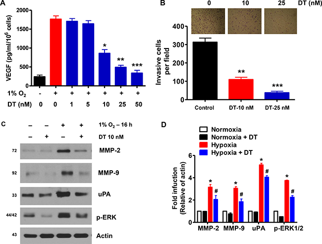 DT inhibits GSC angiogenic and invasive capacities.