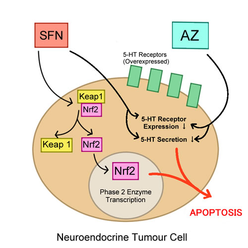 5-HT and Nrf2