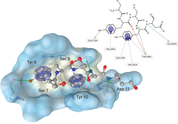 Pharmacophore hypothesis of the Aurora-A/TPX2-7-11 interaction.