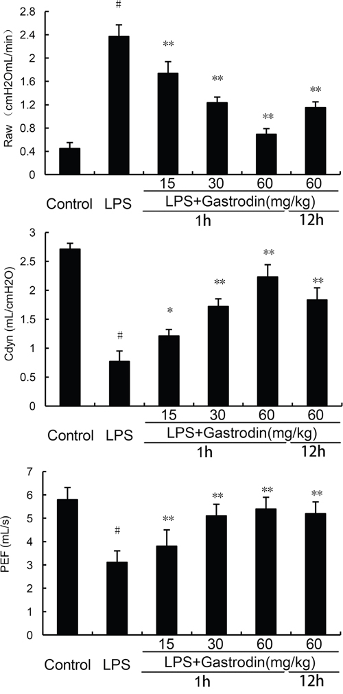 Effects of gastrodin on lung function.