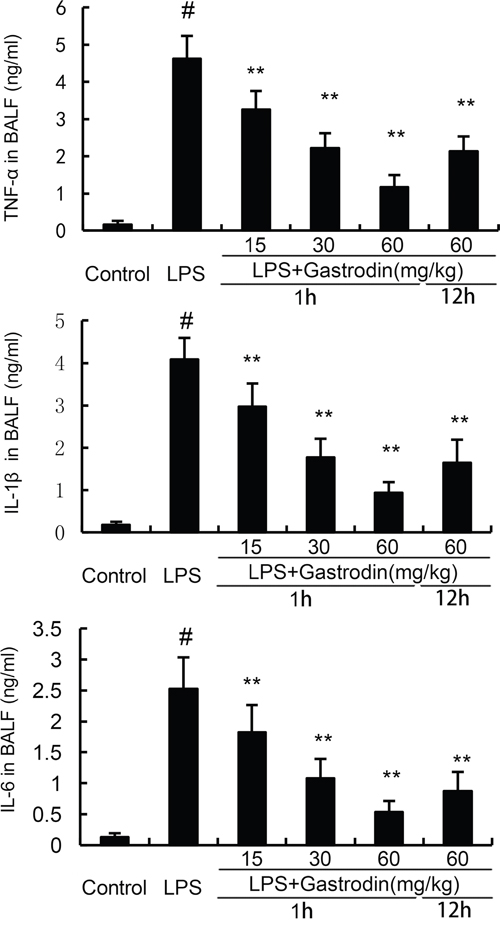 Effects of gastrodin on TNF-α, IL-1ß, and IL-6 production in the BALF of LPS-induced ALI mice.