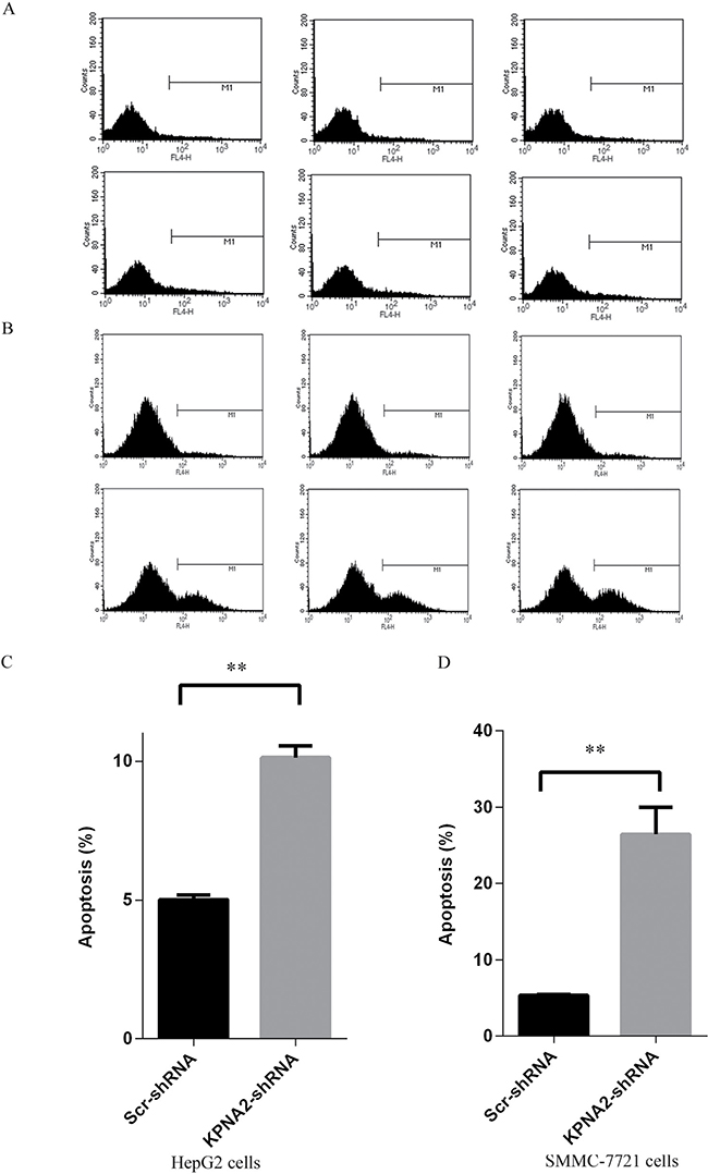 Cell apoptosis induced in human hepatocellular carcinoma cell lines HepG2 and SMMC-7721 with KPNA2 knockdown.
