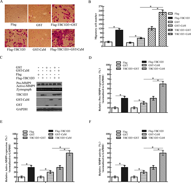 CaM enhances the TBC1D3-induced expression and activation of MMP-9 and migration of MCF-7 cells.