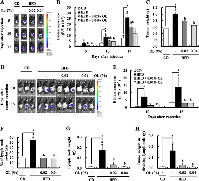 OL suppresses HFD-stimulated tumor growth and lymph node (LN) metastasis in C57BL/6 mice injected with B16F10 cells.