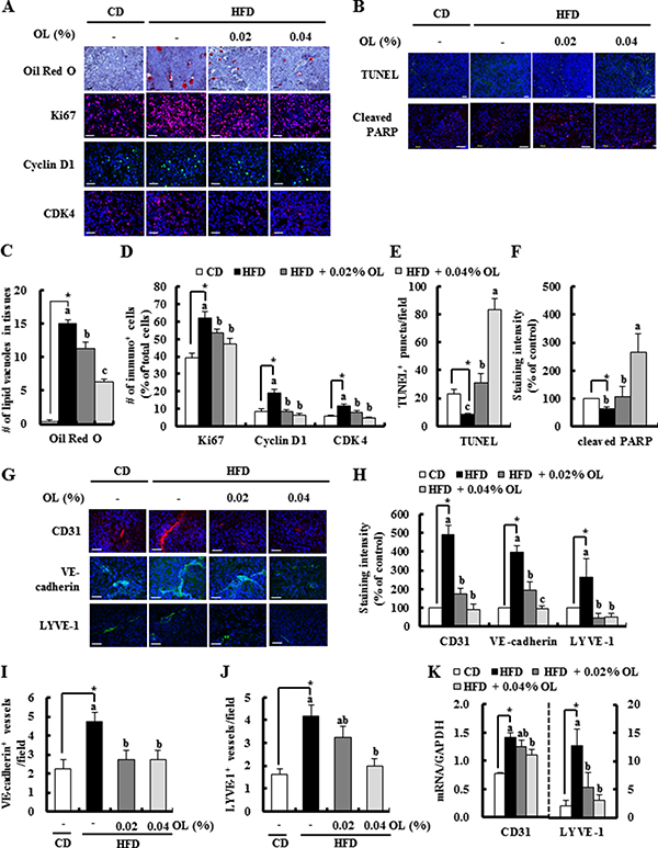 OL suppresses HFD-stimulated accumulation of lipid droplets, cell proliferation, angiogenesis, and lymphangiogenesis and HFD-induced decreases in apoptosis in B16F10 solid tumors.