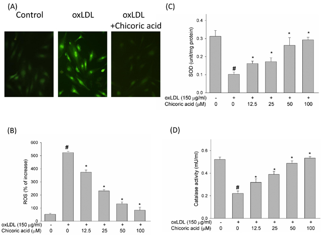The inhibitory effects of chicoric acid on oxLDL-facilitated ROS generation in endothelial cells.
