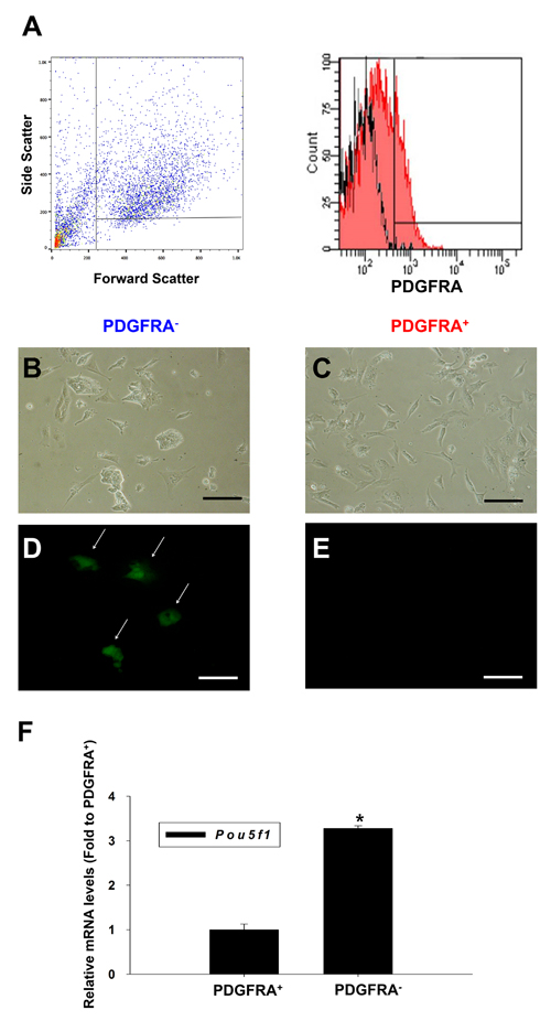 Characterization of PDGFRA