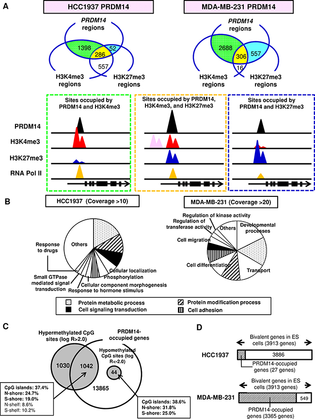 PRDM14 induces epigenetic changes.