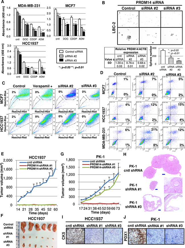 Silencing PRDM14 eliminates the stem cell phenotype and tumor growth.