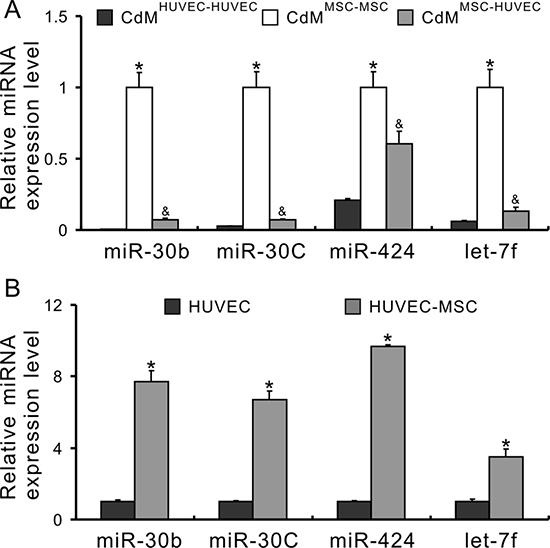 miRs secreted from MSCs transfer to HUVECs.