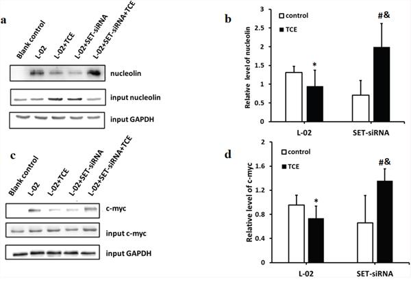 Dephosphorylation impairs the ability of nucleolin to bind to c-myc.