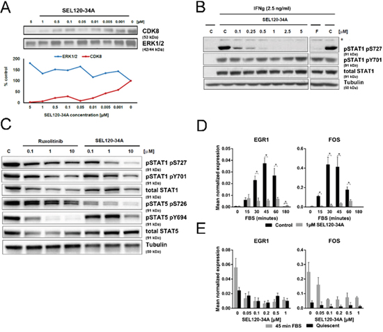 SEL120-34A inhibits phosphorylation of STAT1 S727 and STAT5 S726 and mitogen induced expression of immediate early response genes.
