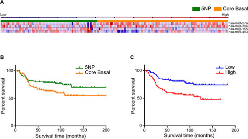 FIGURE 1 (A, B, C): Identification of miRNAs that are differentially expressed in CB and 5NP breast cancers.