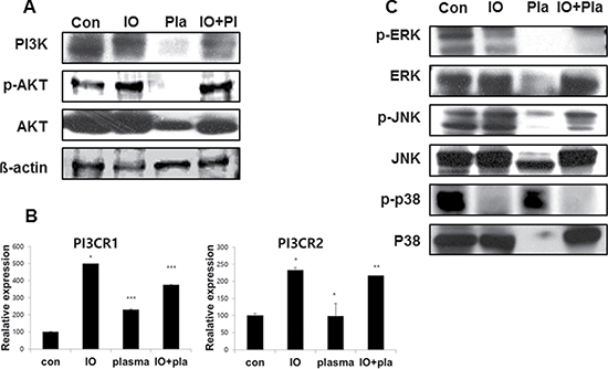 Expression of PI3K in MC3T3-E1 cells.