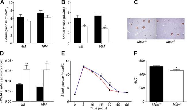 Oncotarget | Loss-of-function myostatin mutation increases