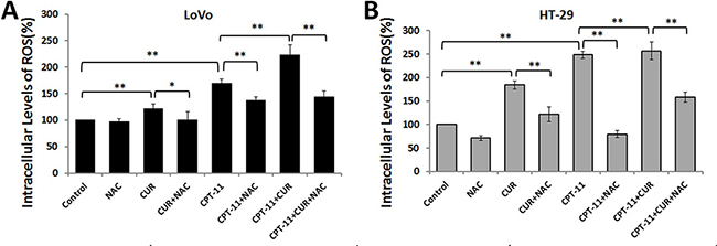 Effects of curcumin and/or irinotecan on ROS generation in human CRC cell lines.