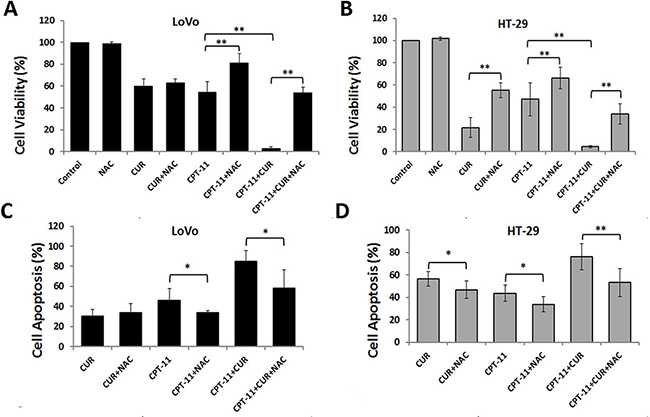 Anti-colorectal cancer effects of curcumin and/or irinotecan are dependent on ROS.