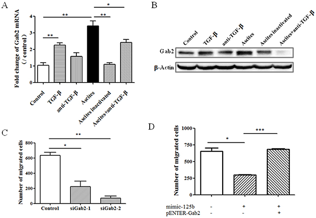 Gab2 mediates miR-125b-related cell migration in ovarian cancer cell.