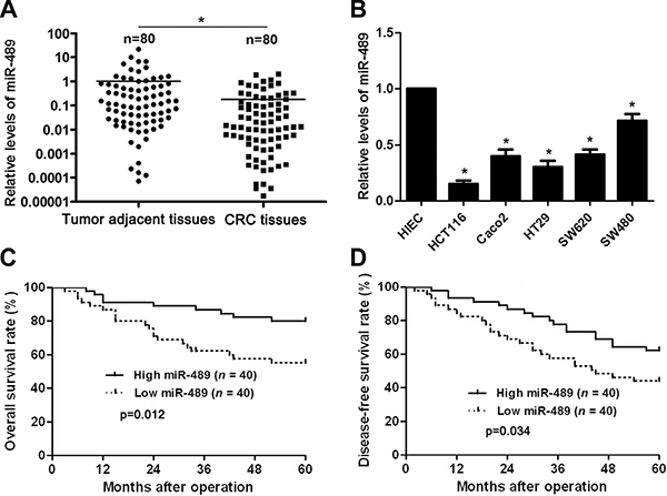 The expression and prognostic significance of miR-489 in CRC.