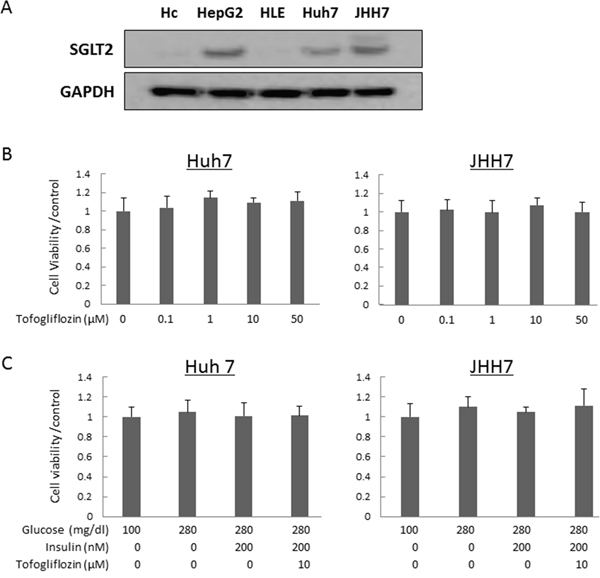 Protein expression levels of SGLT2 in human hepatocyte and hepatoma cell lines and effects of tofogliflozin on the proliferation of the HCC cells.