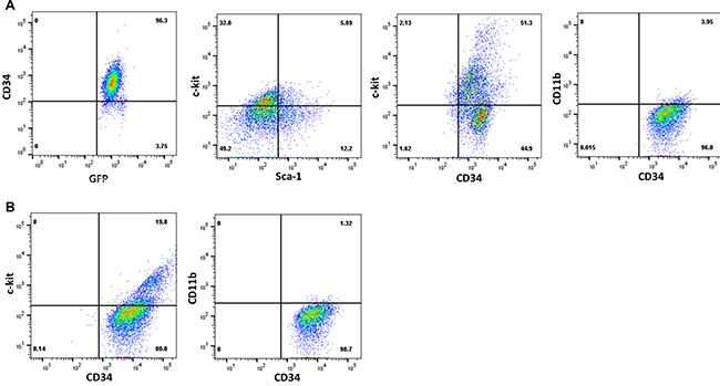 Characterization of CML cells by immuno-phenotyping.