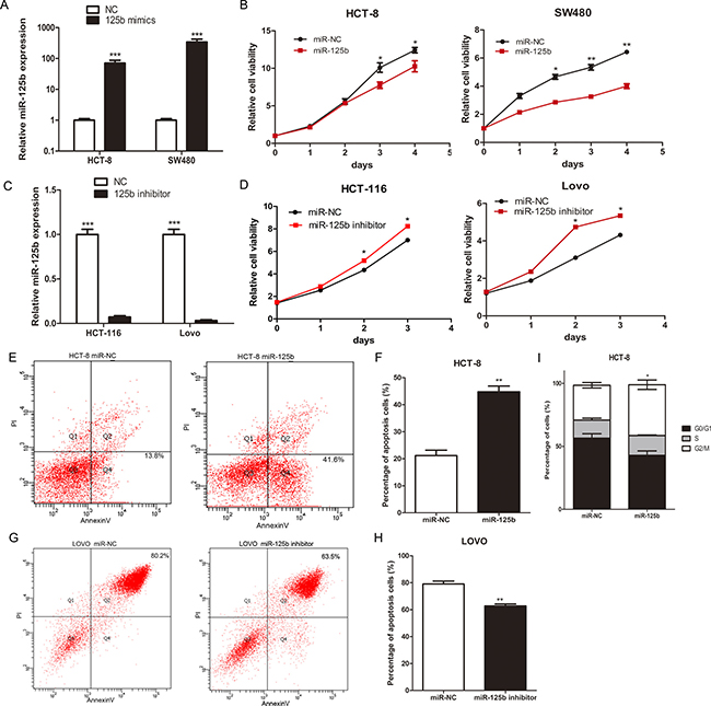 MiR-125b inhibited proliferation, promoted cell apoptosis and blocked cell cycle of CRC cells.