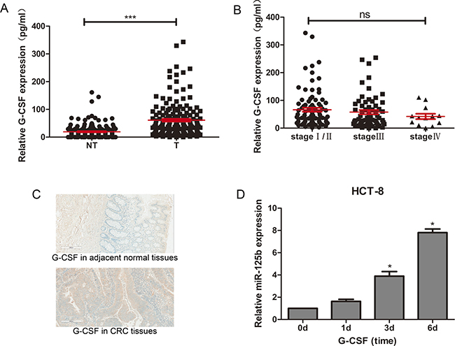 G-CSF promoted expression of miR-125b in HCT-8 and upregulated in CRC tissues.